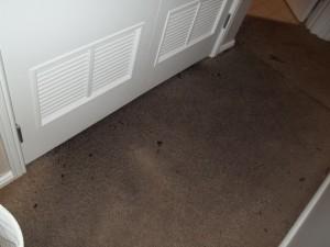 Professional Carpet Stain Removal Services in Chicago