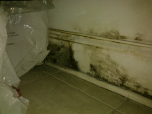 These Simple Tips Prevent Mold Growth for Chicago Residents