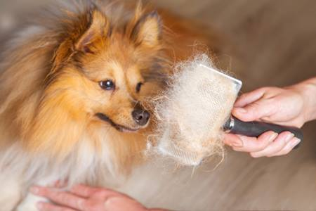 Shedding Dog (1)